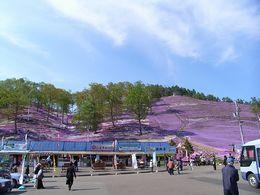 芝桜公園写真