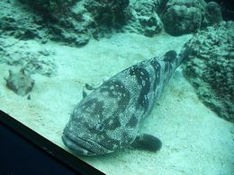 美ら海水族館のさかなたち写真