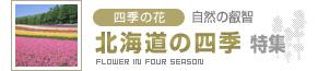四季の花スペシャル