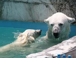 【動物とのふれあいで癒される場所/円山動物園】写真