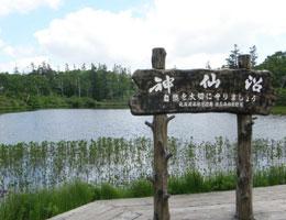 【自然の恵みを感じる沼/神仙沼】写真